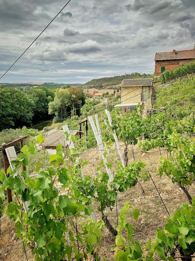 Straußwirtschaft Weingut Goldschmidt