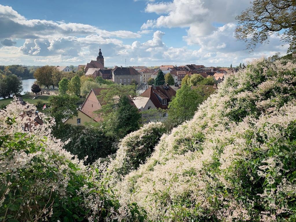 Ausflugsziele Sachsen-Anhalt Havelberg