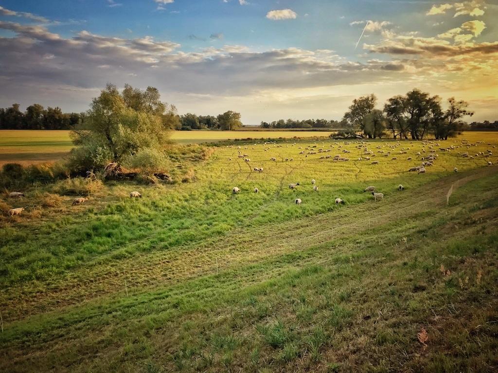 Oderradweg Nationalpark Unteres Odertal